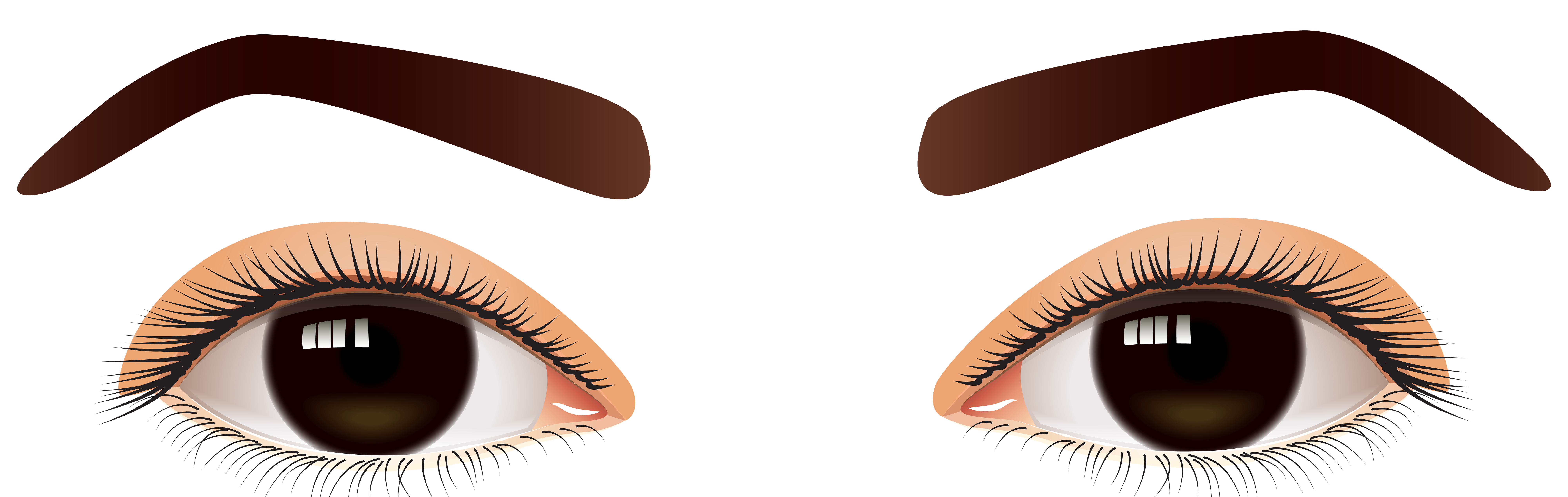 banner royalty free Eyebrow clipart. Female brown eyes png.