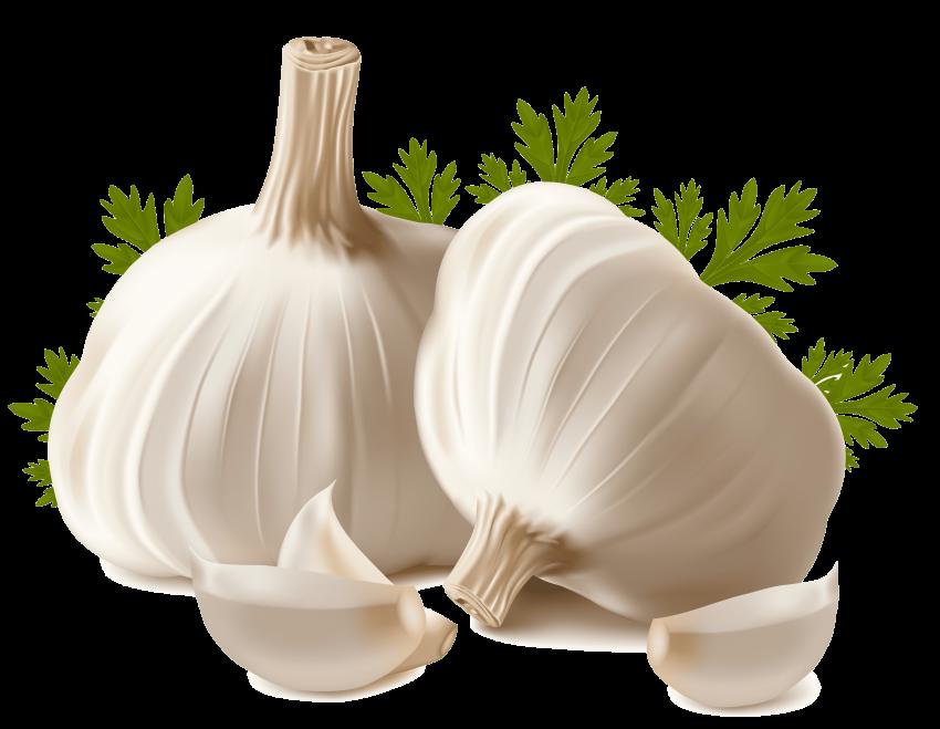 graphic royalty free garlic png
