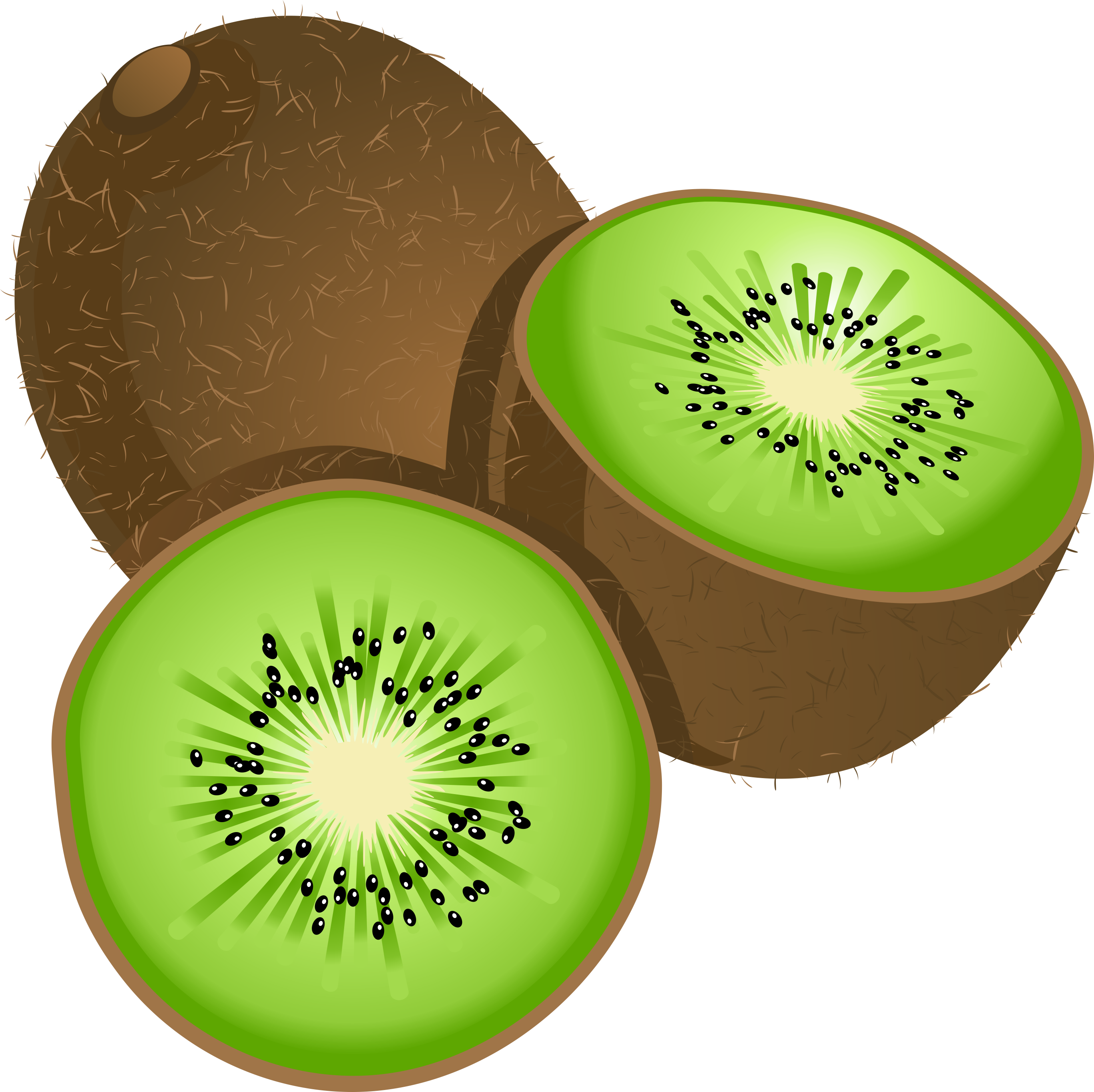 picture royalty free download Clipart kiwi. Kiwifruit stock photography clip