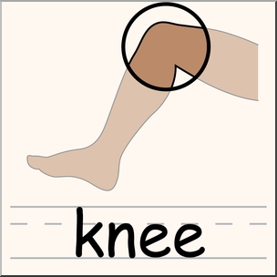 picture library Clipart knee. Clip art parts of