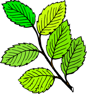 clip art transparent library Summer clip art at. Leaves clipart