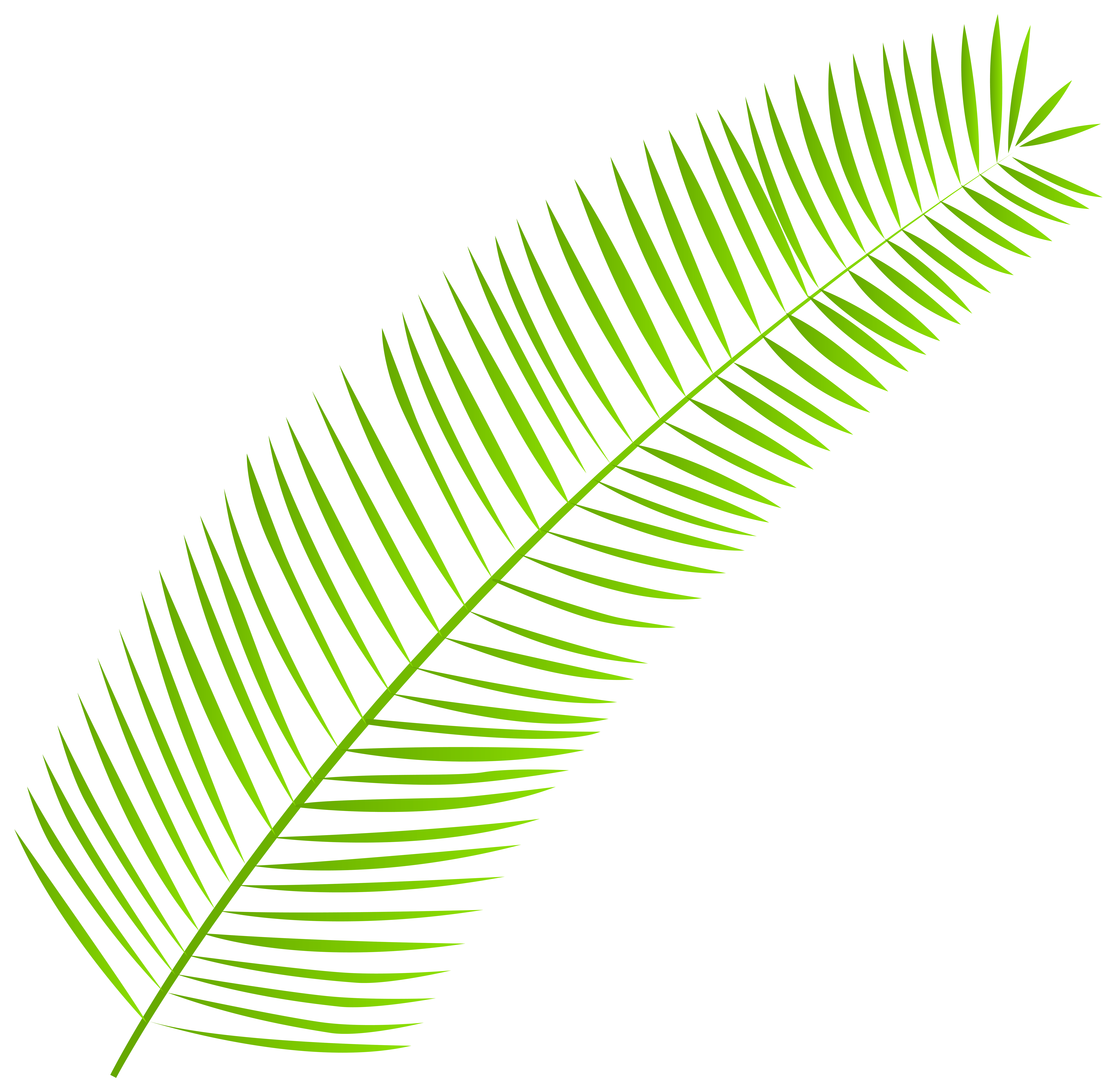 clip library library Leaves clipart palm leaves. Leaf png clip art.