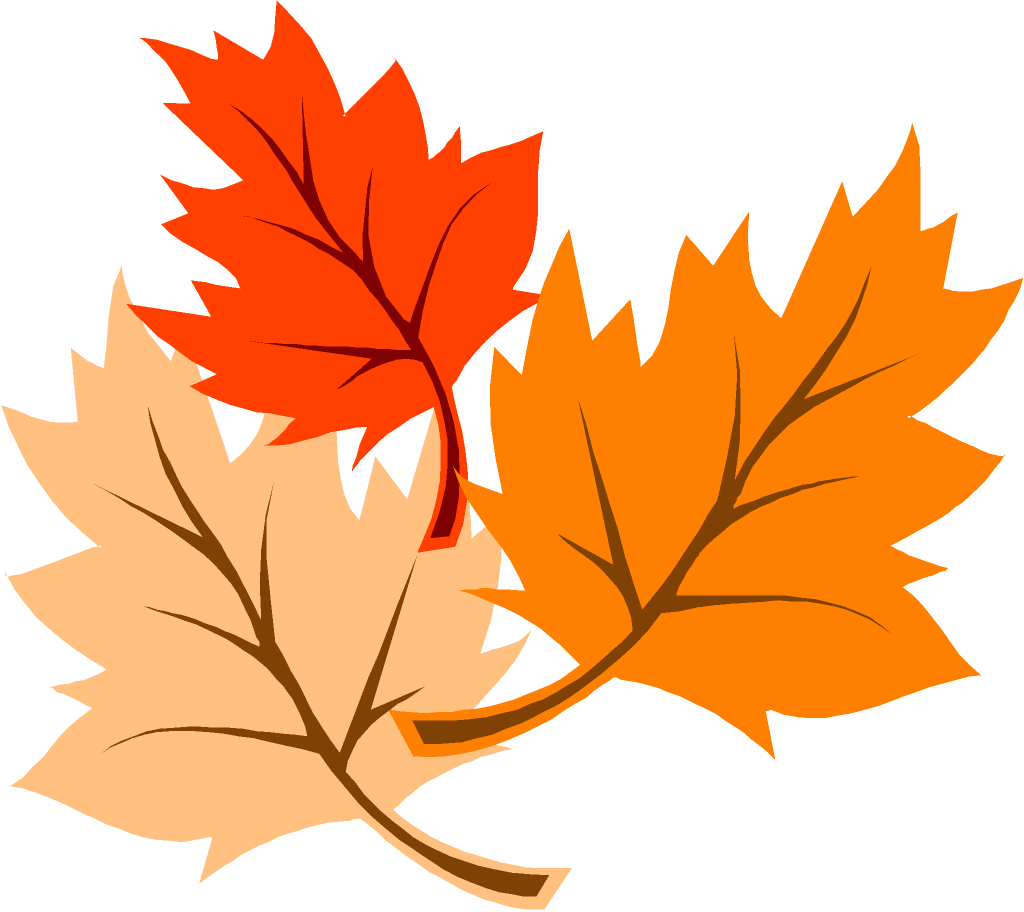 freeuse  collection of leaves. Maple clipart acorn leaf