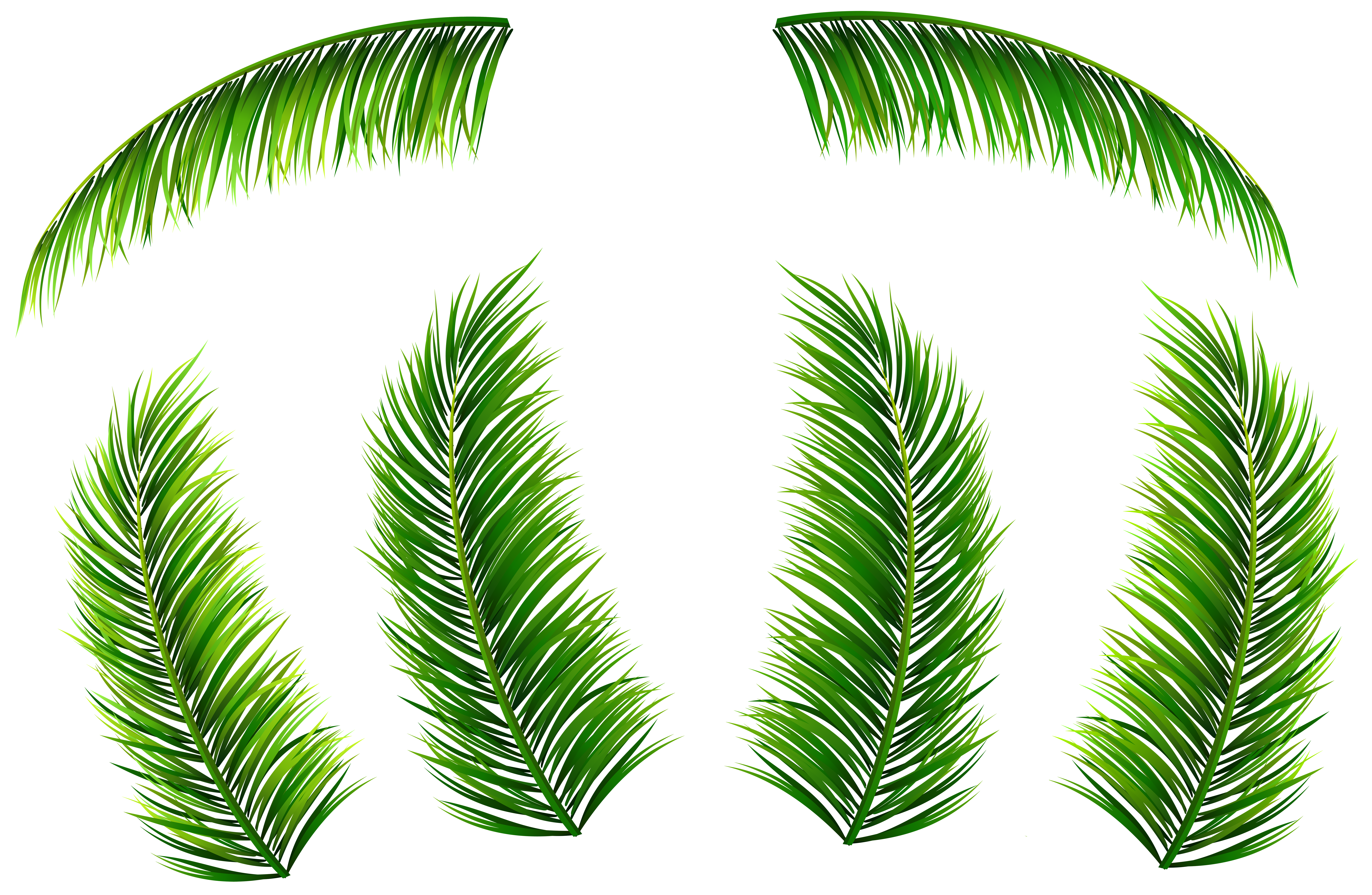 clip library Png clip art image. Leaves clipart palm leaves.