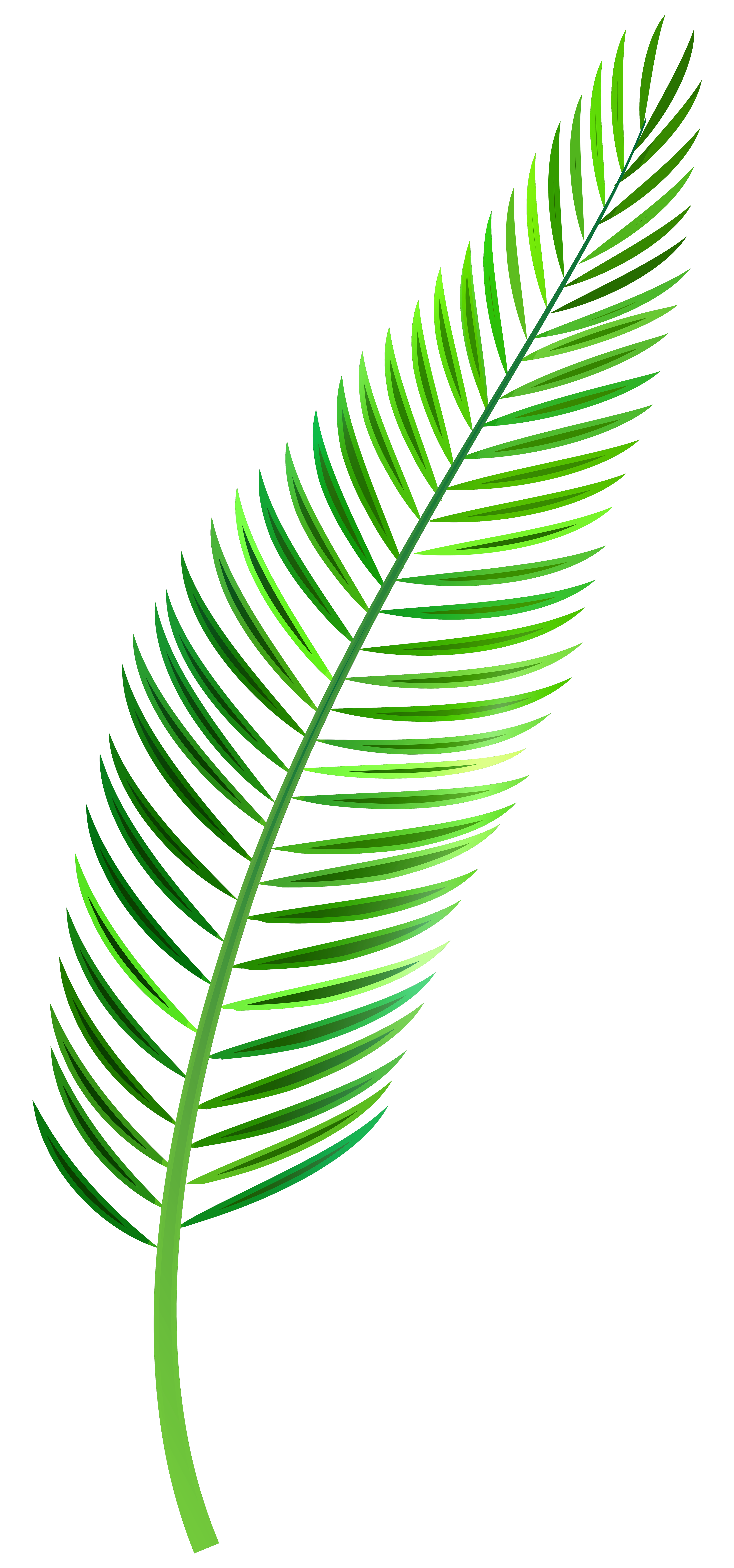 clip library library Leaf png clip art. Leaves clipart palm leaves.