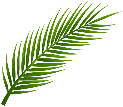 picture transparent stock Palm Tree Leaf PNG Clip Art