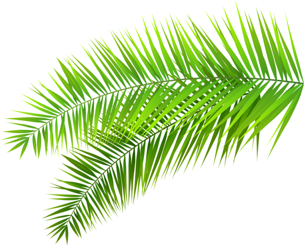 banner library download Leaves clipart palm leaves. Decoration png clip art.