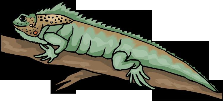 vector transparent Free lizard bearded dragon. Beard clipart side