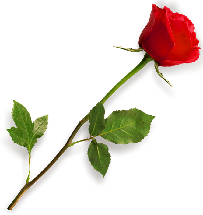 image freeuse library Red Rose PNG Clipart Picture