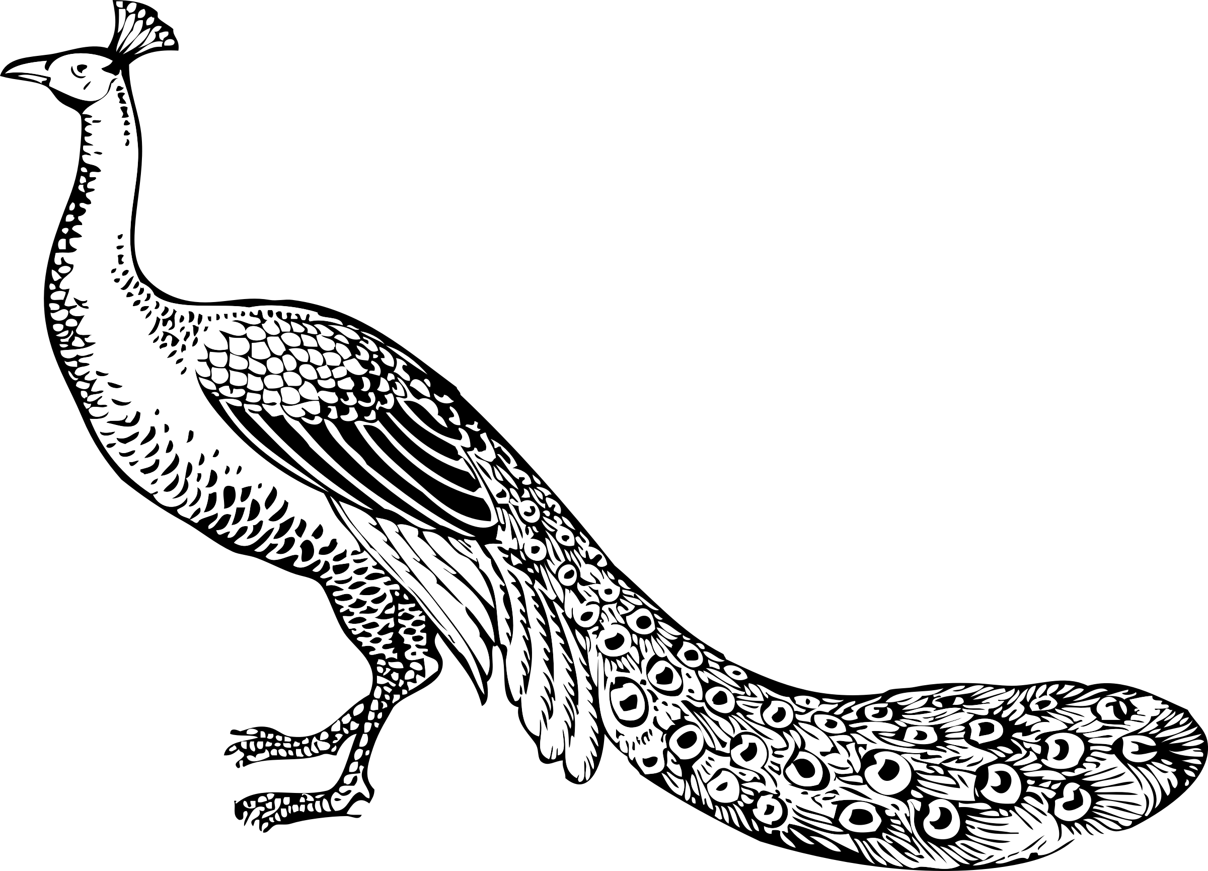 image free stock Clipart peacock big image. Drawing peacocks black and white