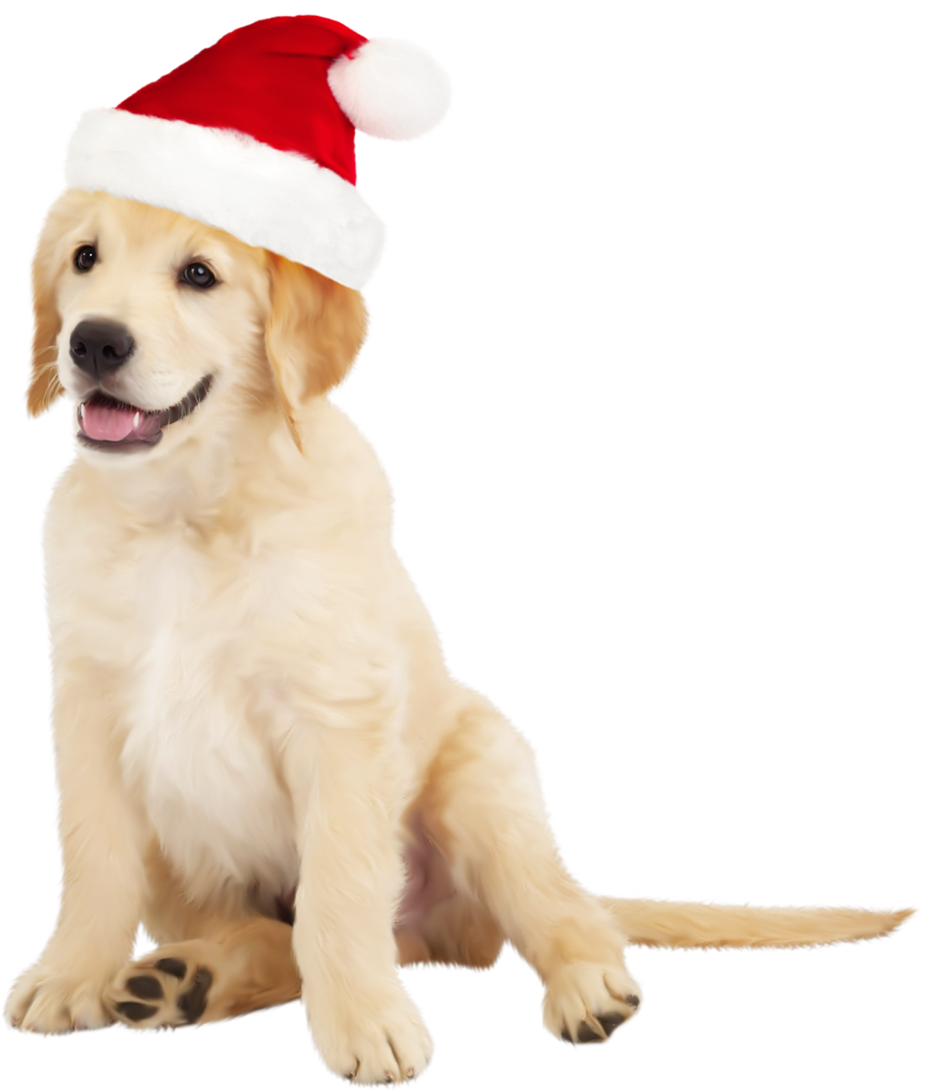 royalty free download Golden retriever clipart realistic dog. Cute with santa hat