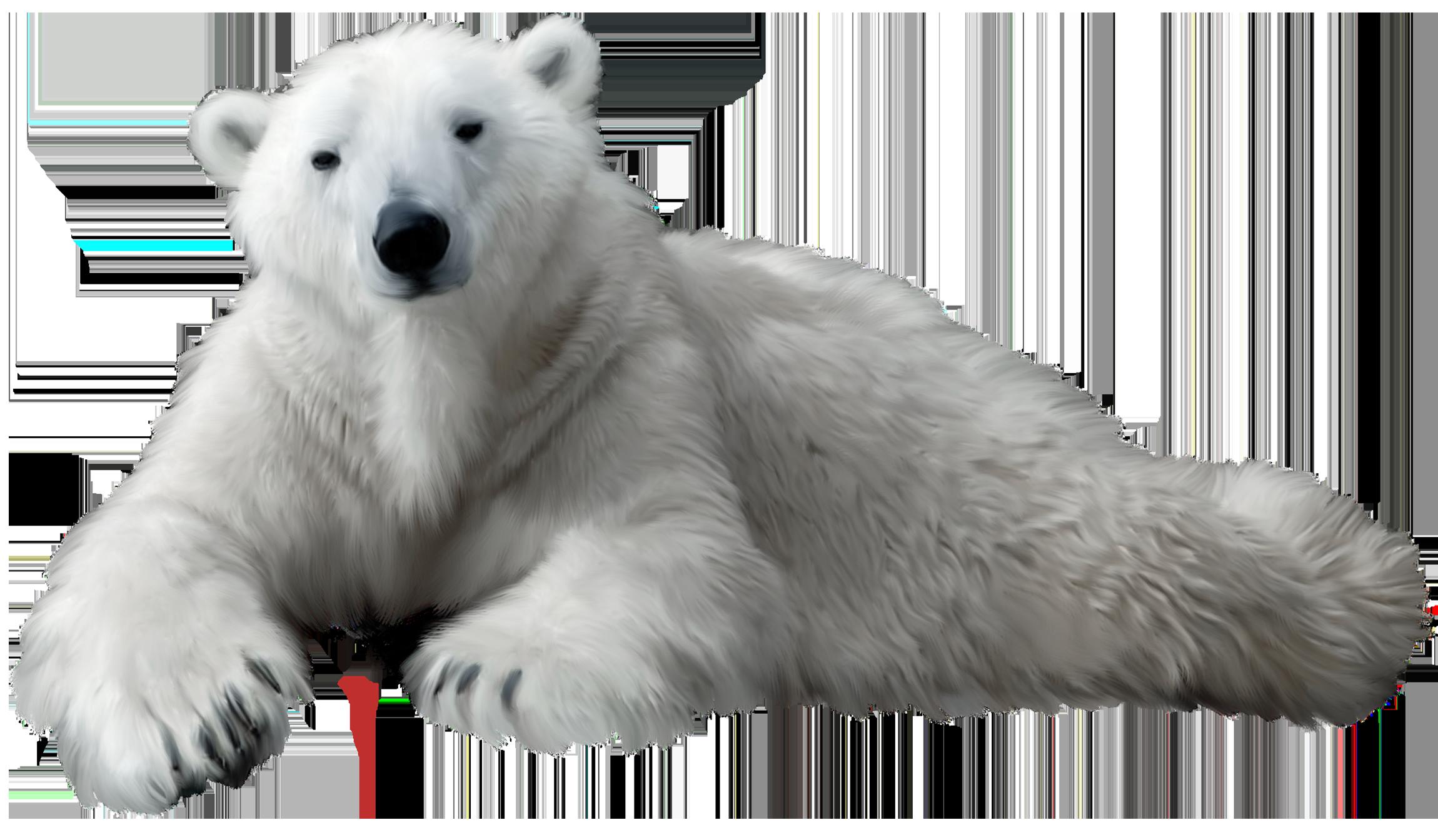 banner black and white Png clip art best. Clipart polar bear