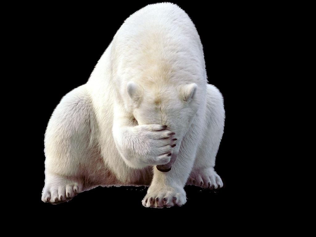 royalty free Clipart polar bear. Png peoplepng com