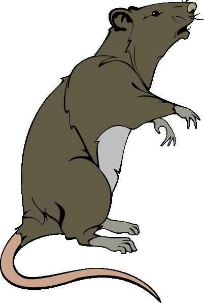 clip royalty free library Rat clipart. Clip art free panda.