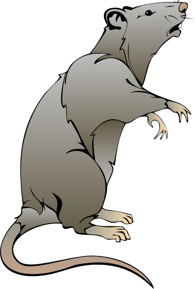 clip art transparent stock Cartoon Rat Drawings