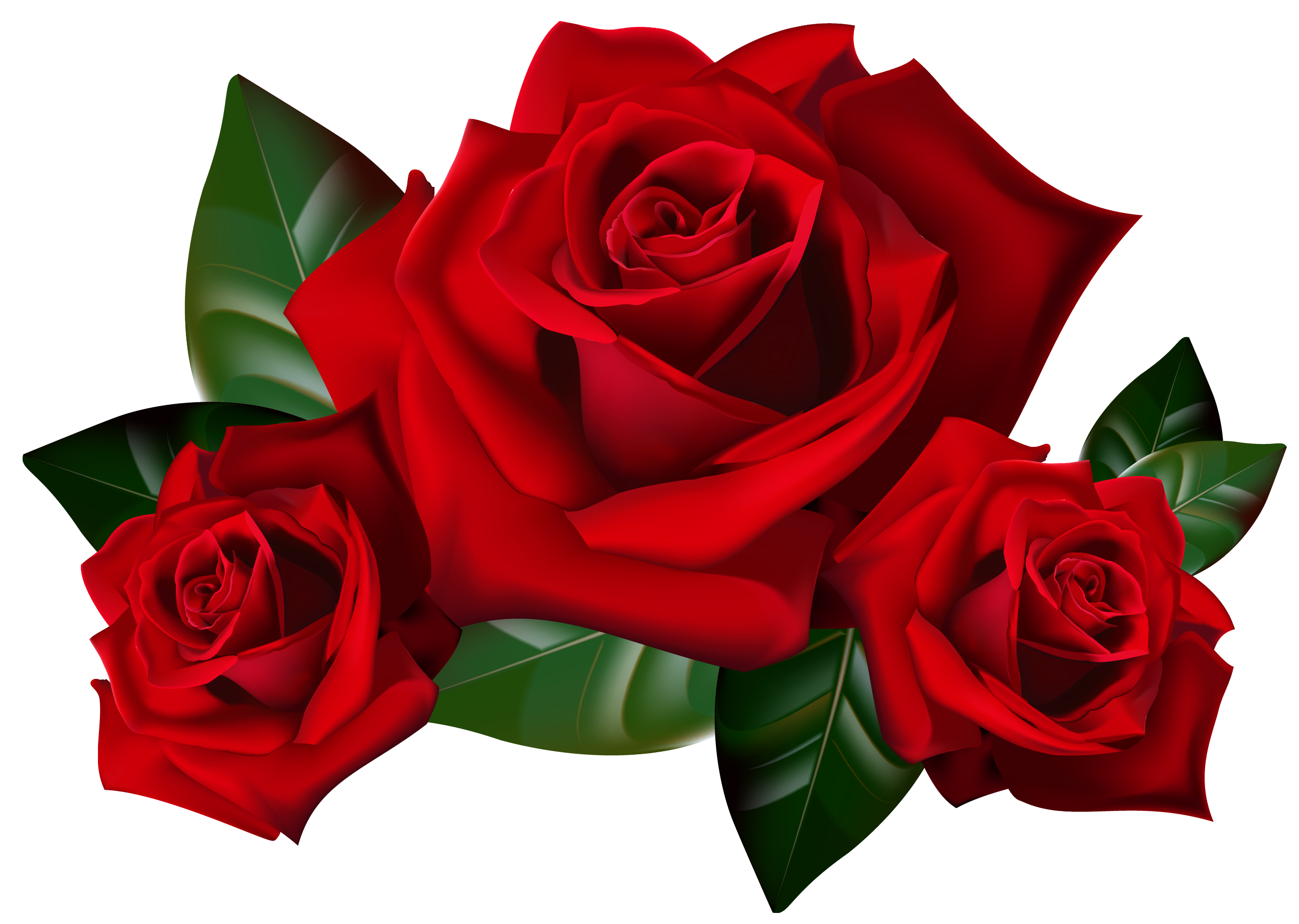 png freeuse stock A clipart rose. Bouquet of roses frame