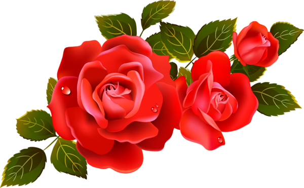svg black and white Large Red Roses Clipart Element