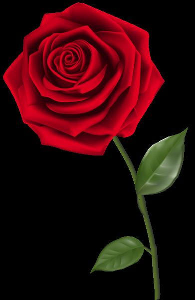 image freeuse download Rose clipart single. Red png image pinterest.