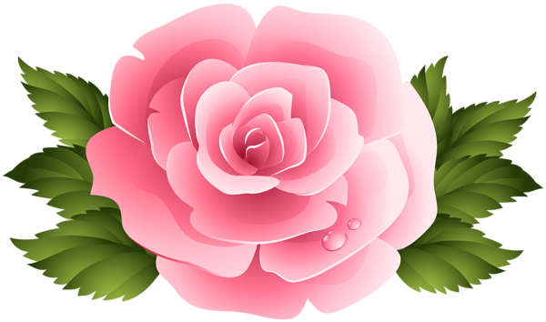 banner free stock Pink Rose ClipArt PNG Image
