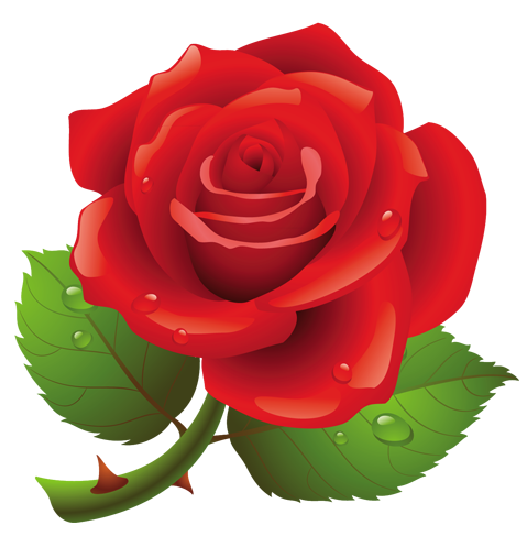 transparent download Red Rose PNG Art Picture