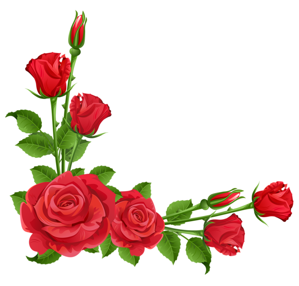 vector transparent library Red Roses Transparent PNG Clipart
