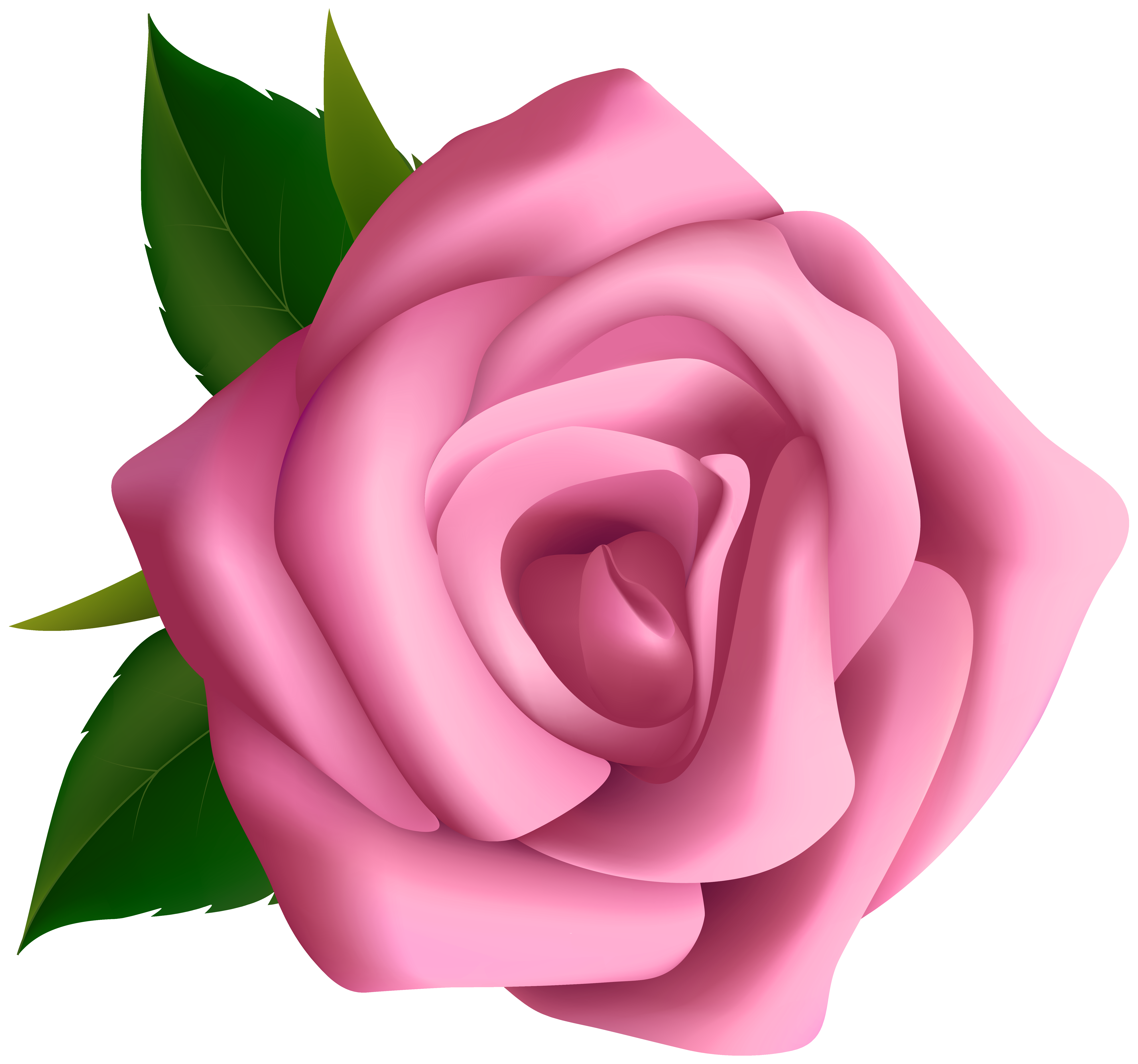 picture library download A clipart rose. Soft pink png image