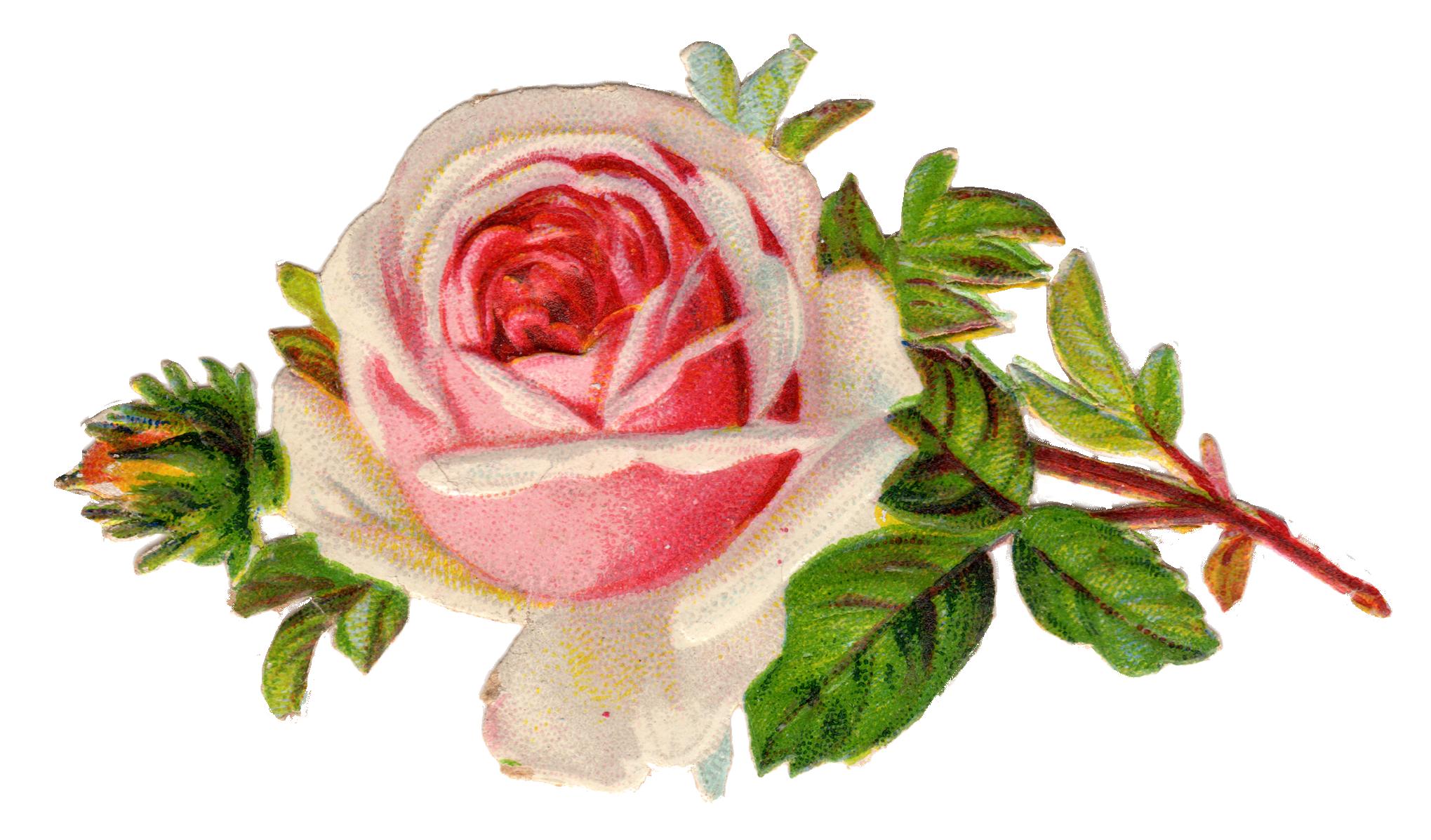 svg black and white download Free Vintage Rose Clip Art