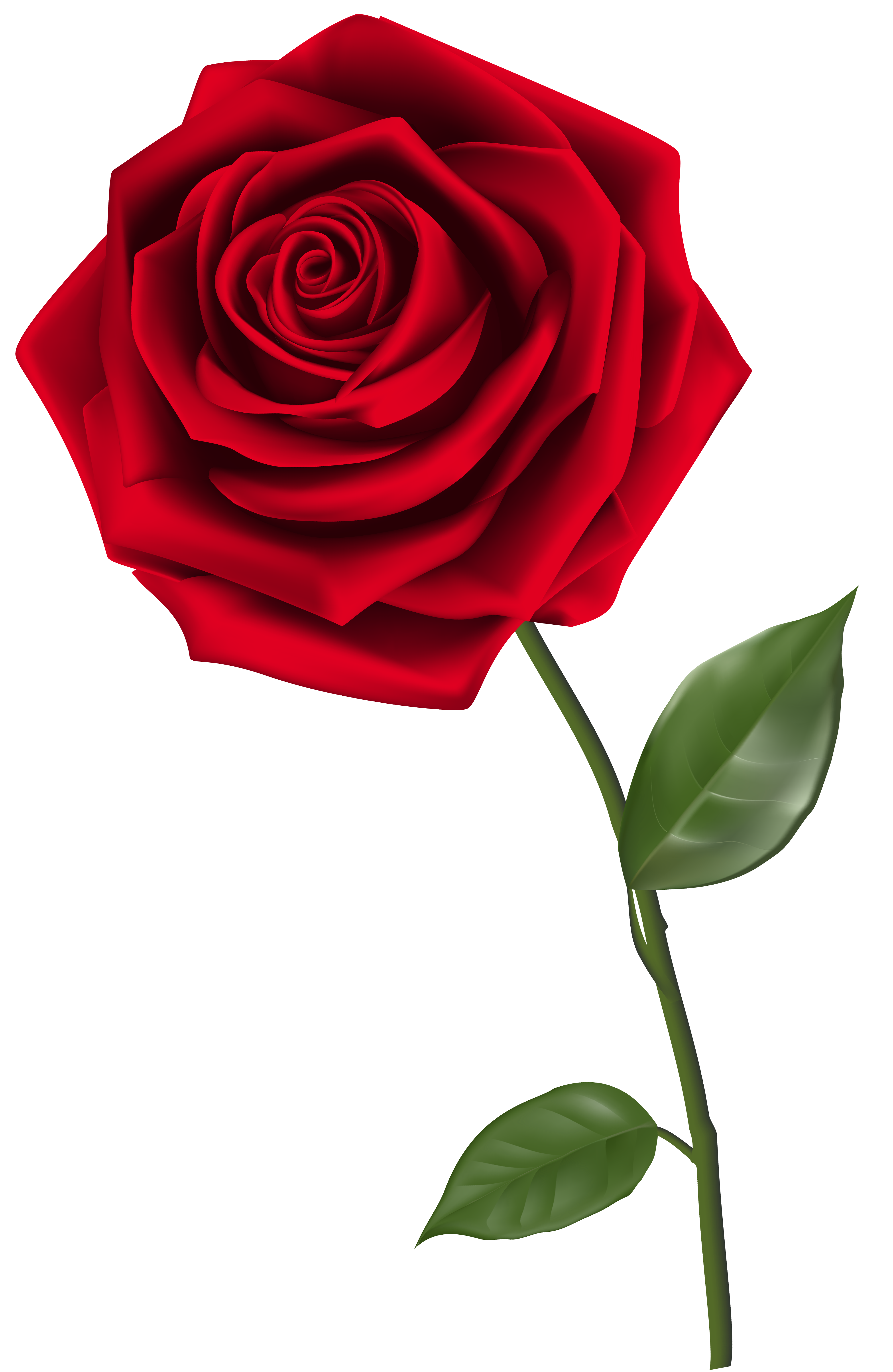 clipart royalty free Single Red Rose PNG Clipart Image