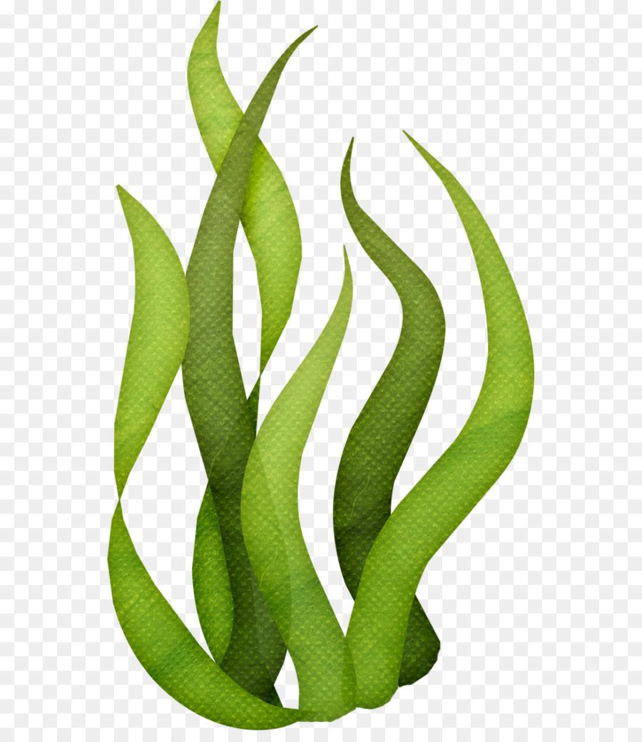 picture freeuse stock Seaweed transparent. Cartoon clipart sea ocean.