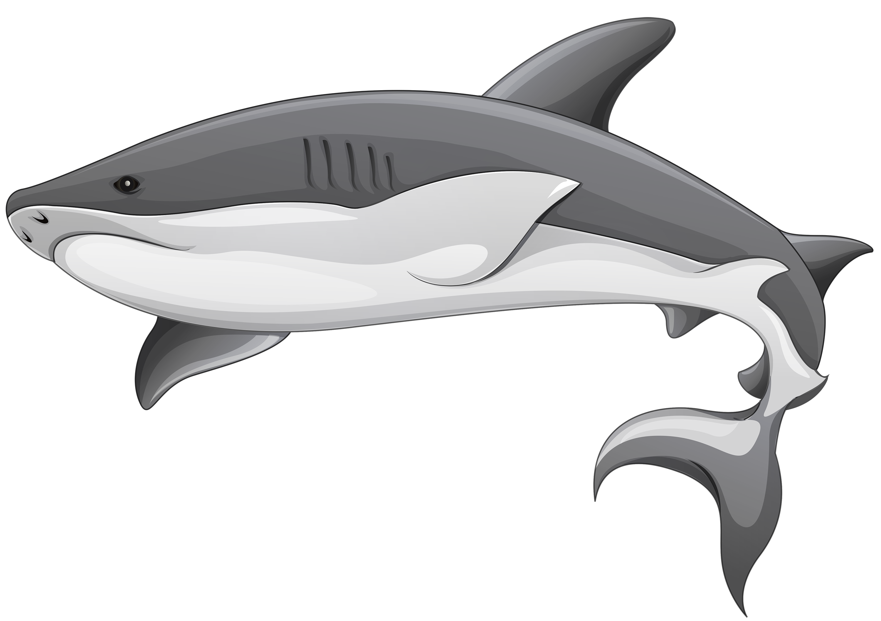freeuse library Grey png clipart best. Drawing sharks dogfish shark