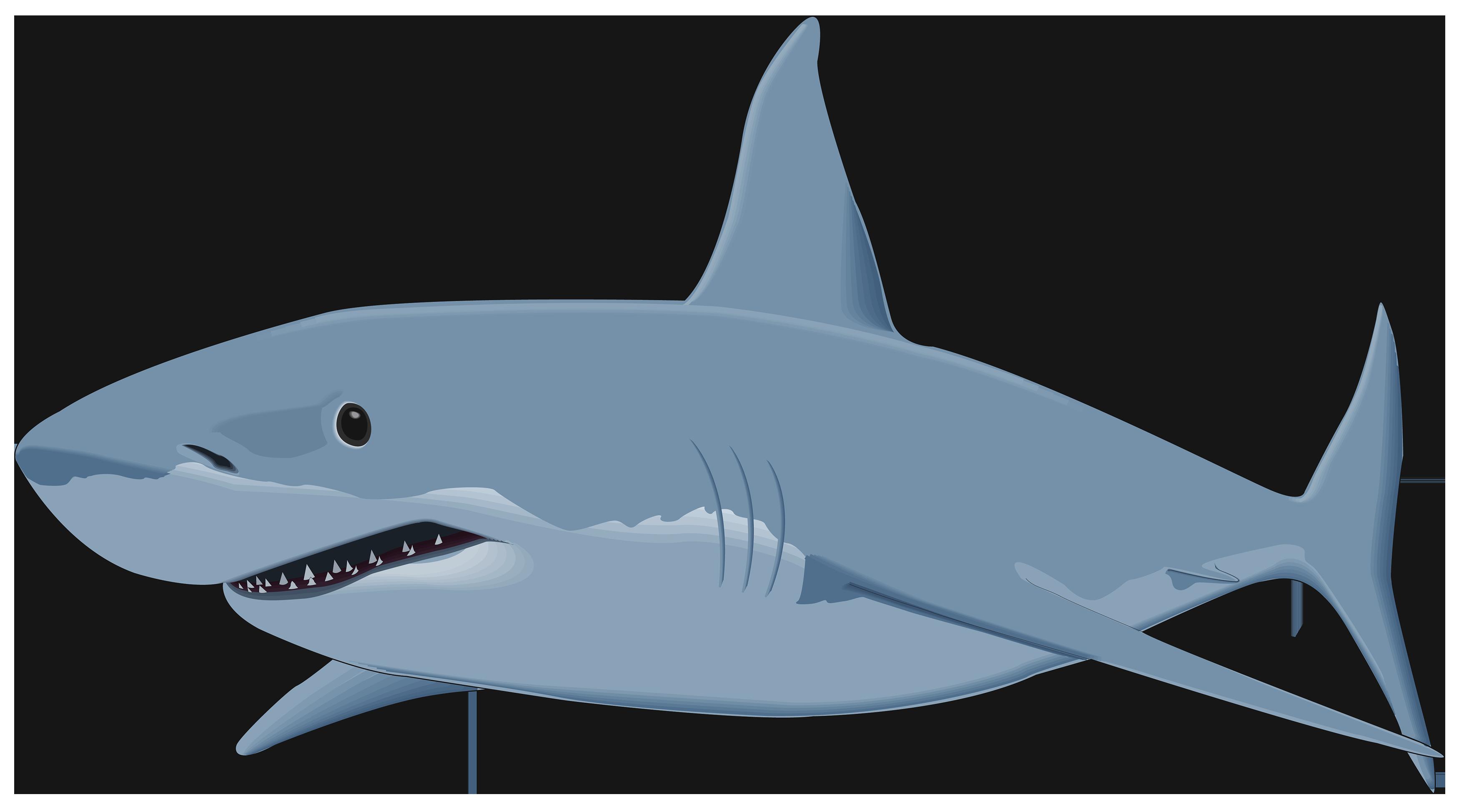 svg Shark png image best. Sharks clipart.