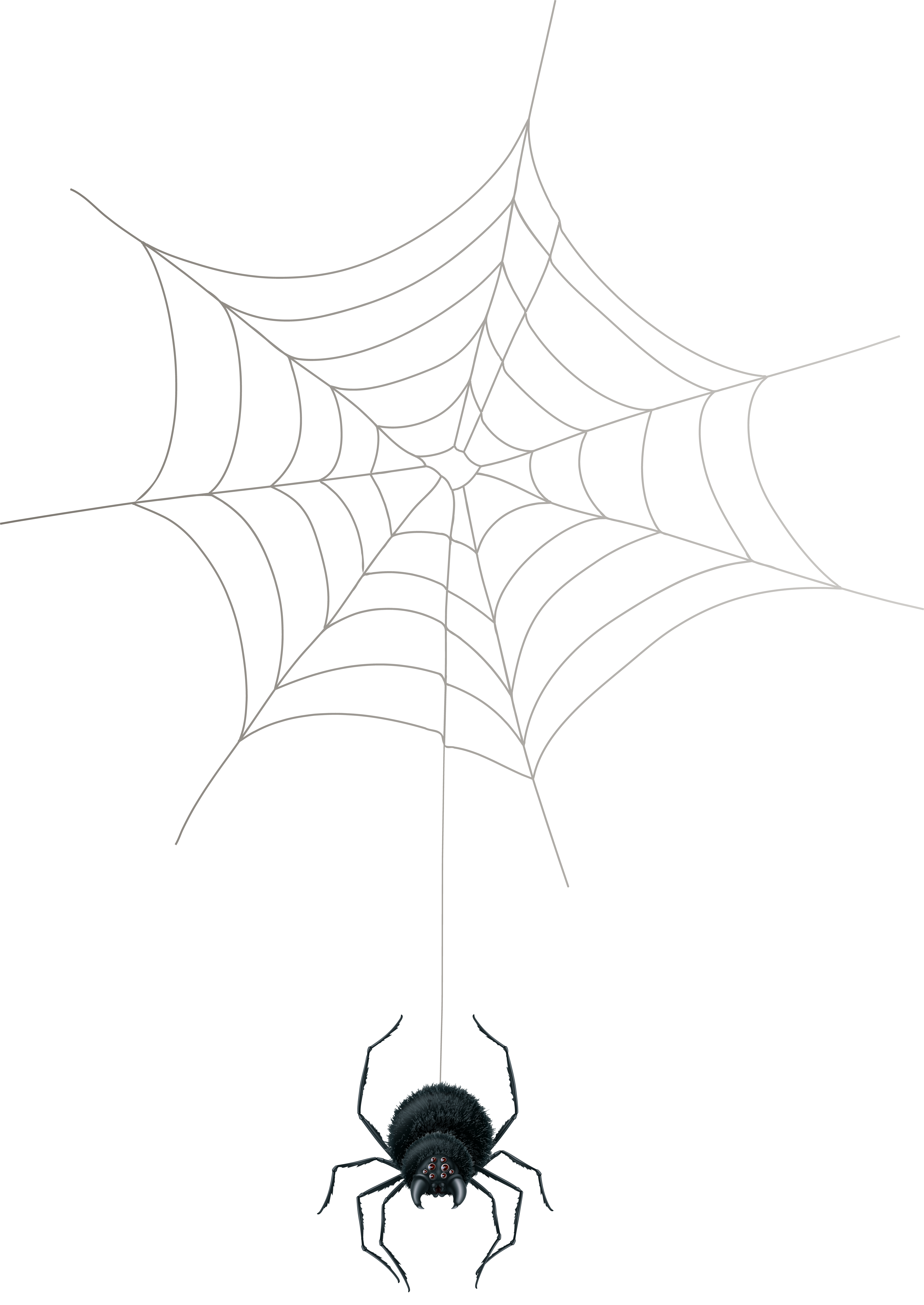 image transparent Png clip art gallery. Clipart spider web