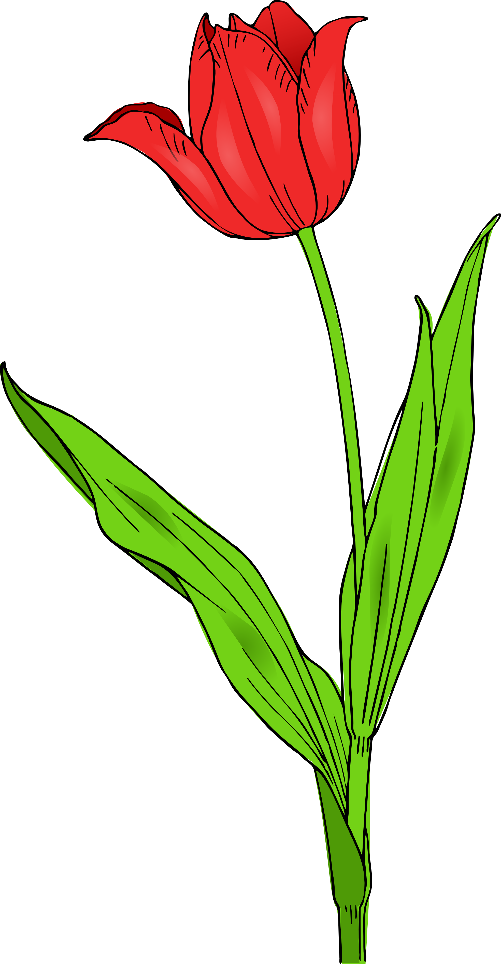 svg Daffodil clipart daffodil bouquet. Spring colorful free on