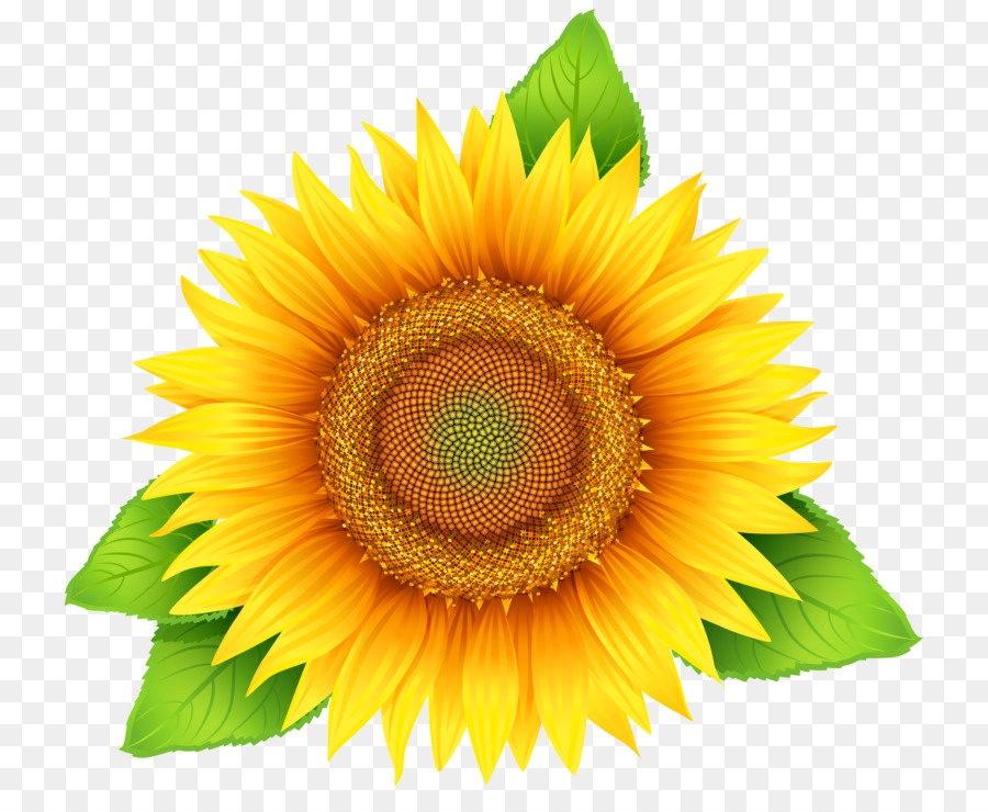 clip art transparent library Clipart sunflower. Yellow background flower