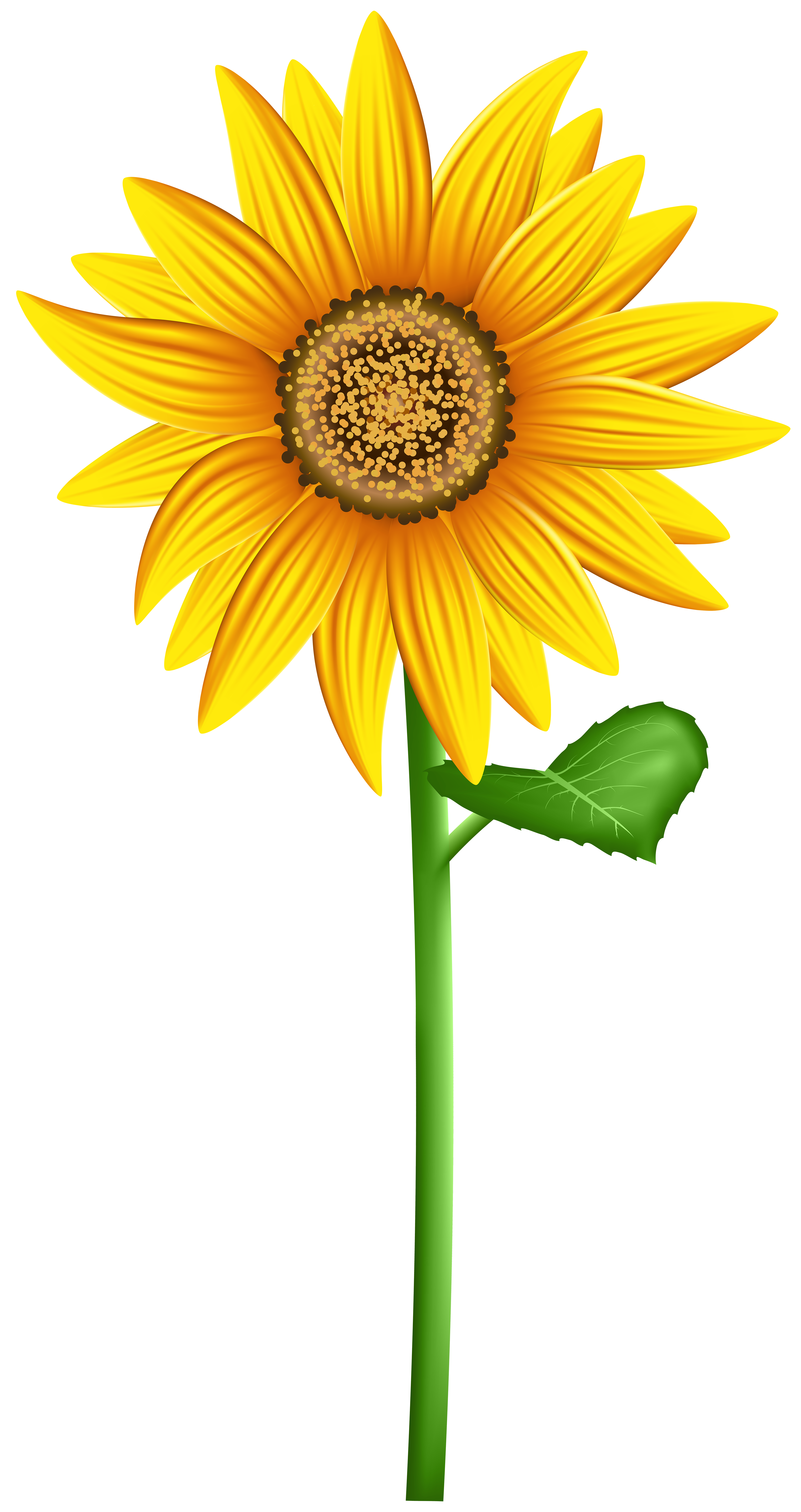 image royalty free stock Clipart sunflower. Png transparent clip art