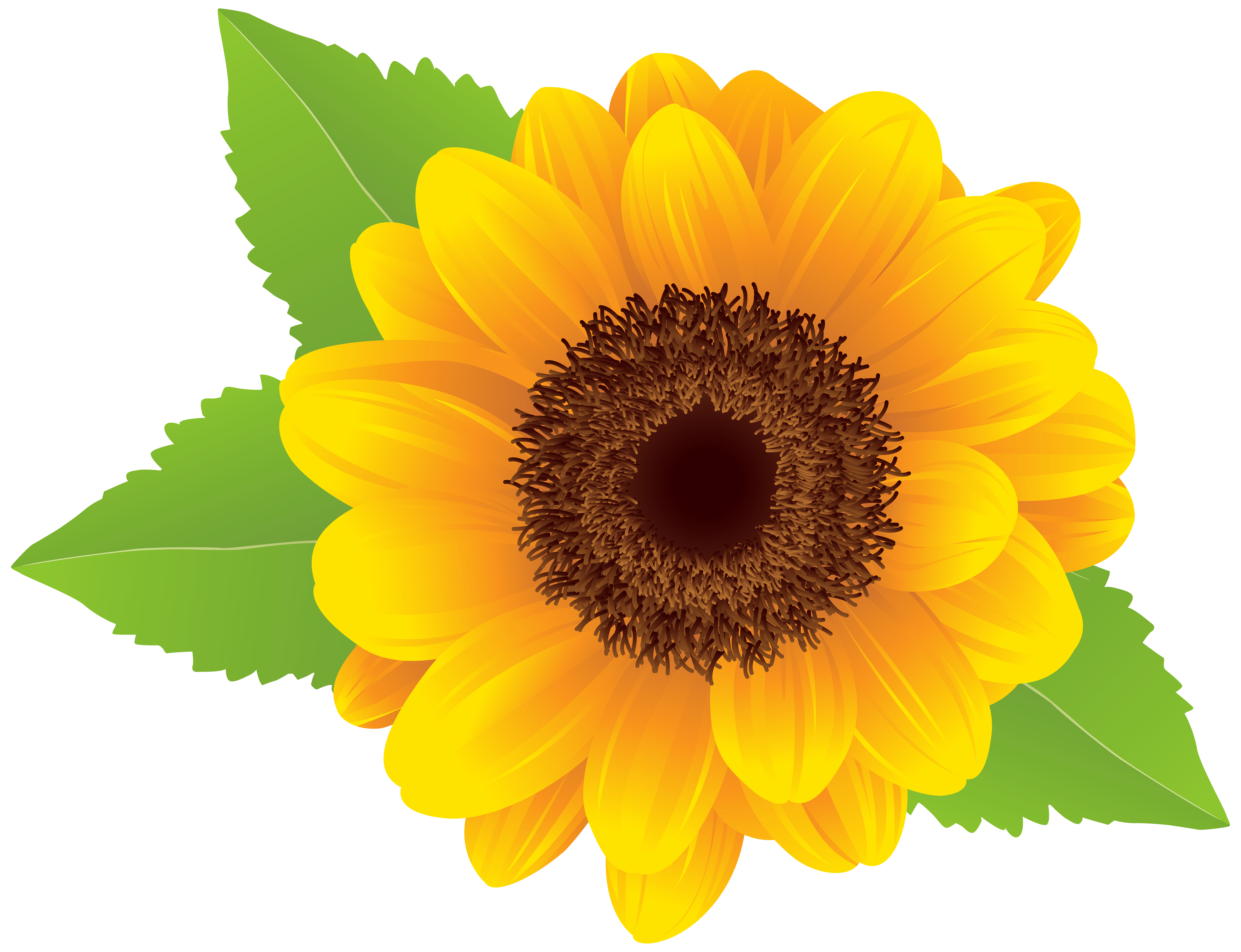image royalty free library Png clip art image. Clipart sunflower