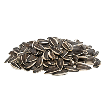 jpg library Sunflower seeds PNG