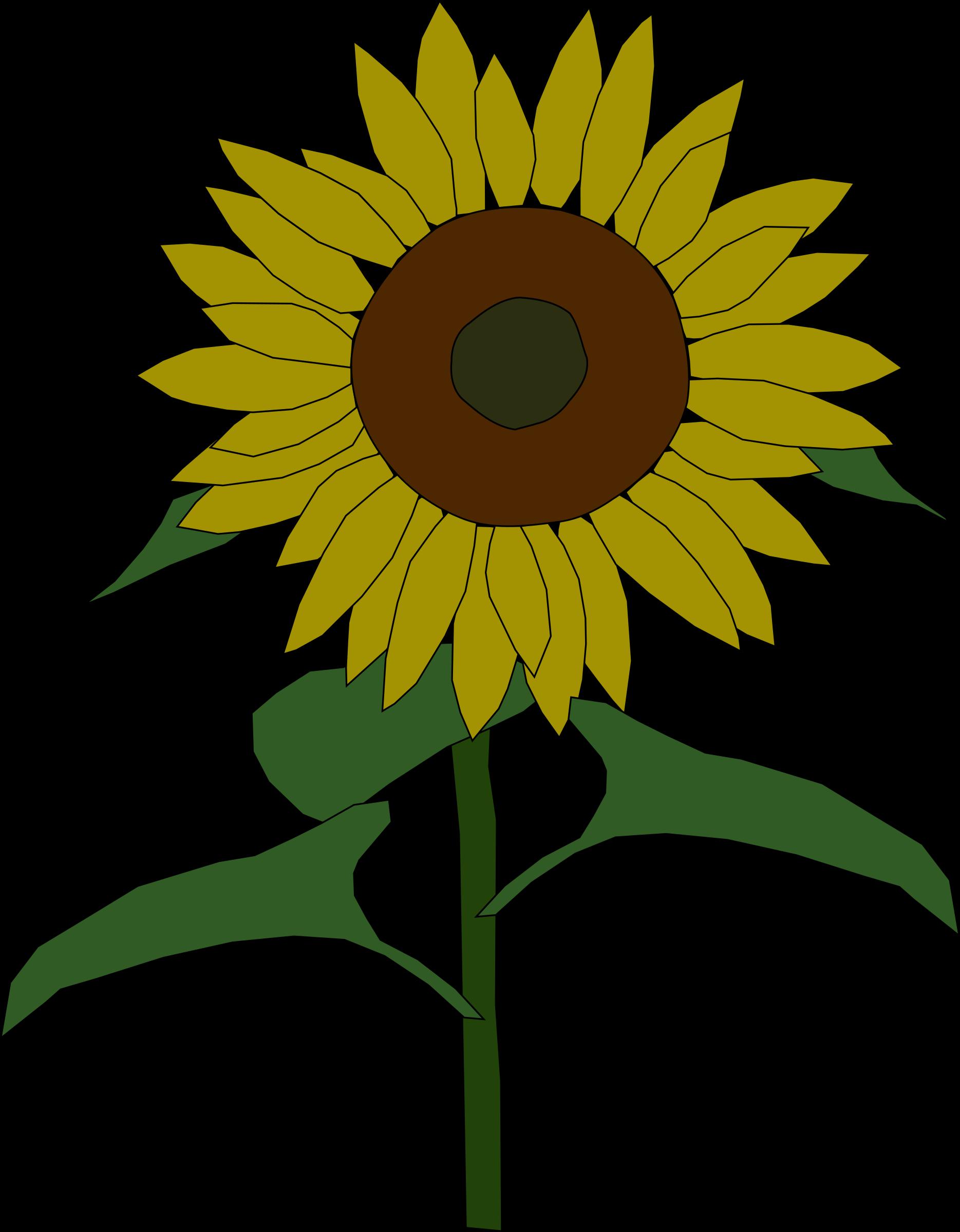vector transparent download . Clipart sunflower