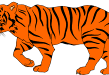 vector freeuse Animals images pics free. Tiger clipart