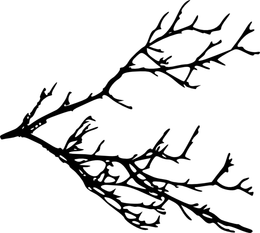royalty free download Branches png free images. Clipart tree branch silhouette