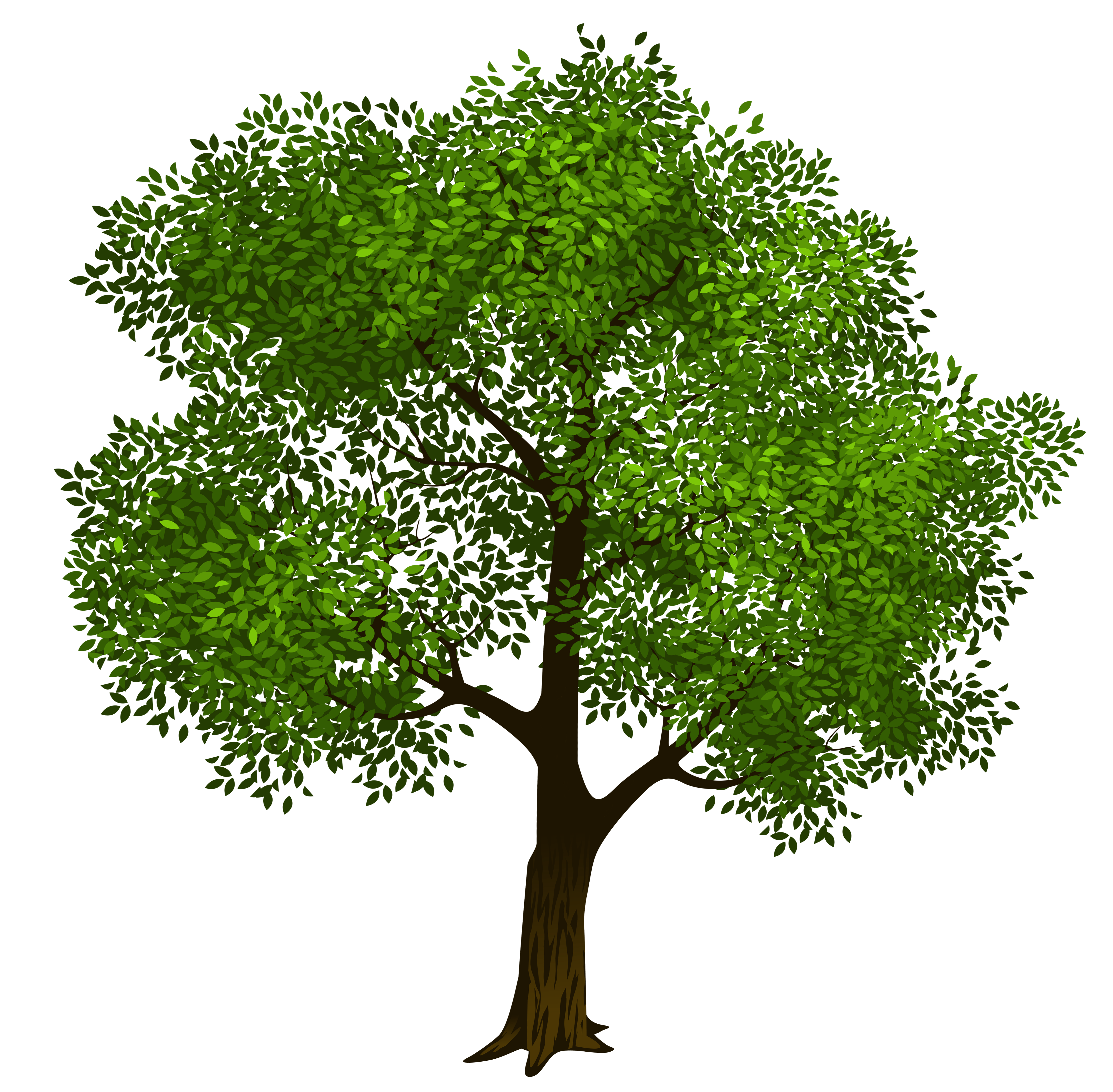 banner Transparent green picture gallery. Tree clipart.