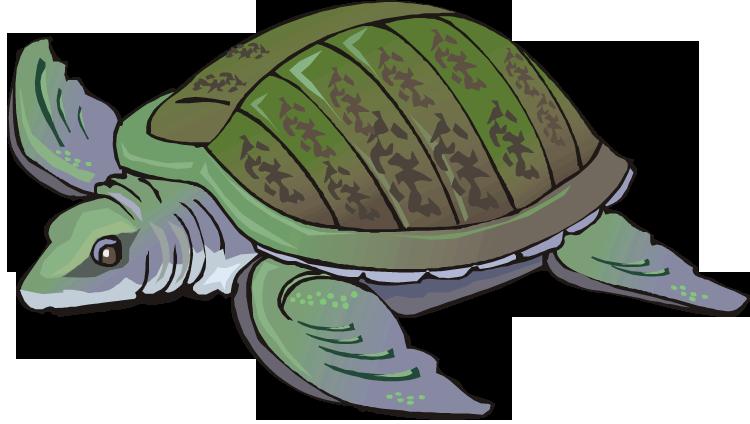 jpg royalty free Free turtle swimming. Tortoise clipart animal hawaiian