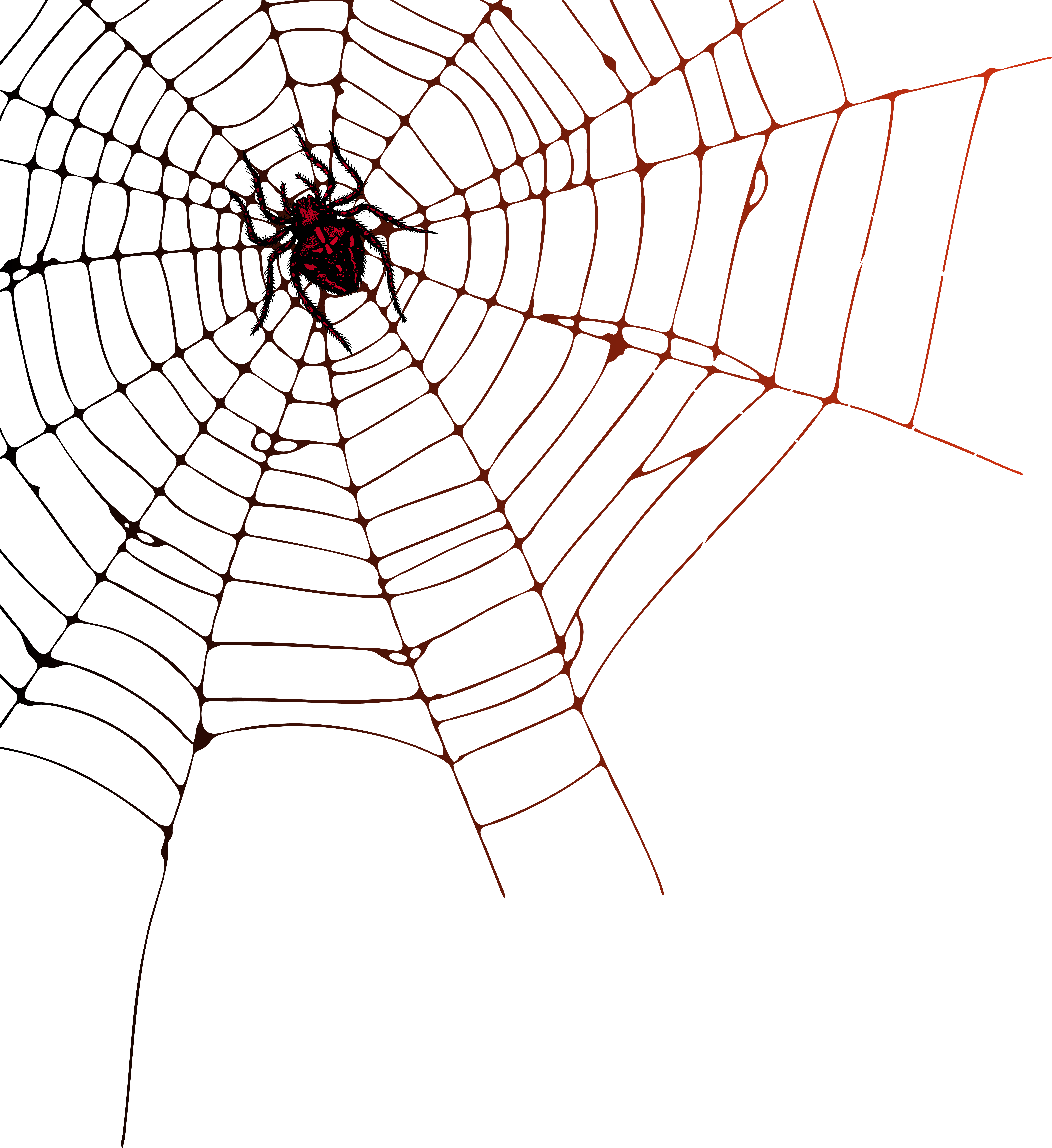 clip art transparent library Clipart web. Spider png clip art
