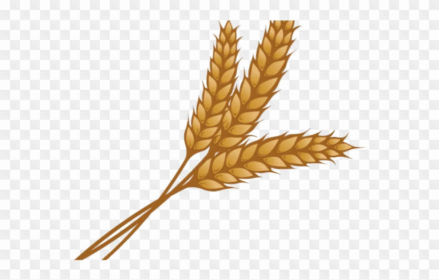 clip art Single piece png download. Clipart wheat