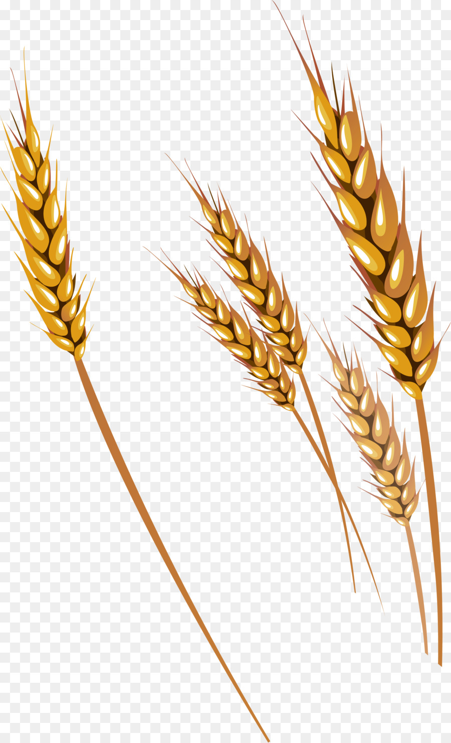 banner free library Clipart wheat. Cartoon graphics plant transparent
