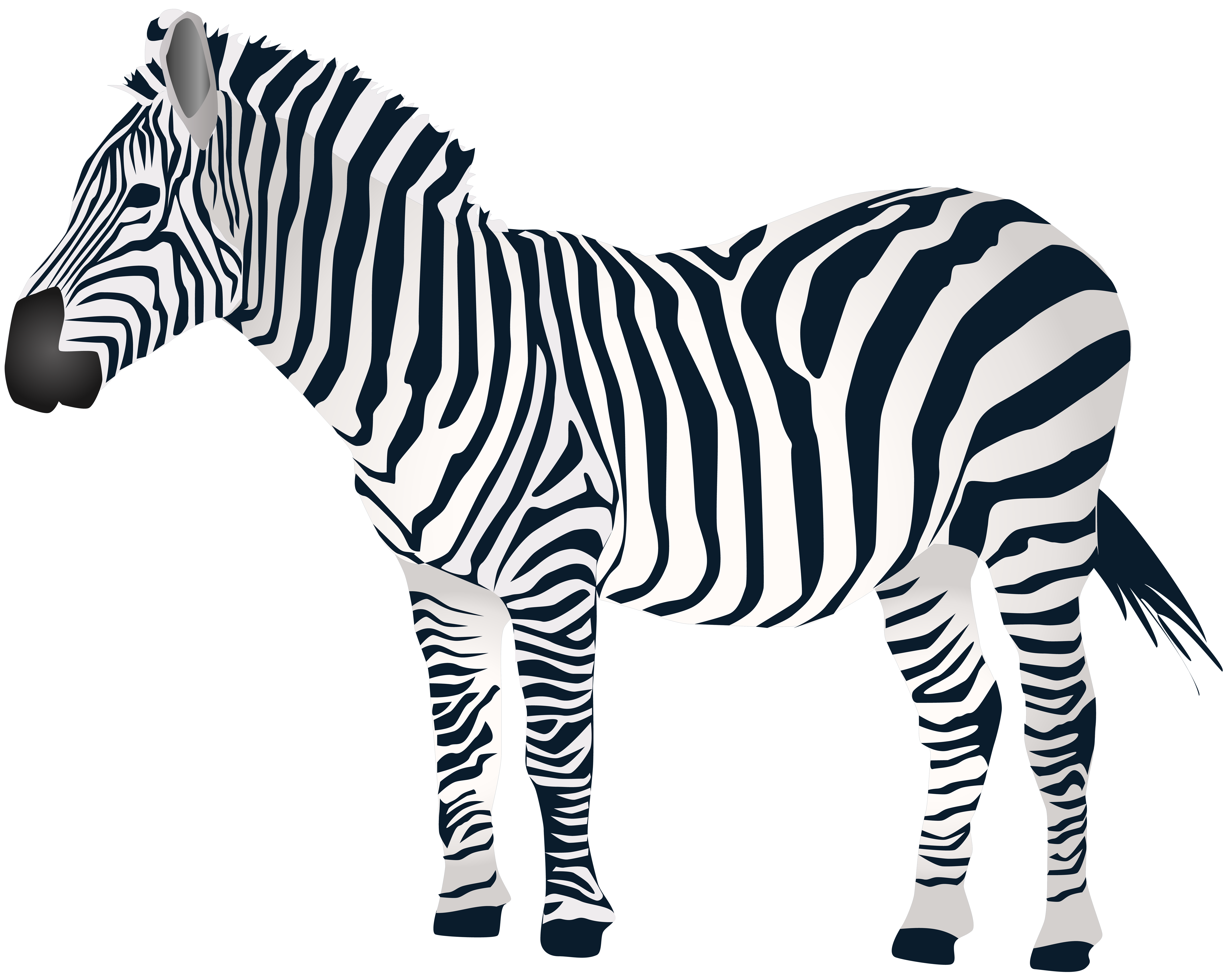 jpg black and white download Png clip art gallery. Zebra black and white clipart.