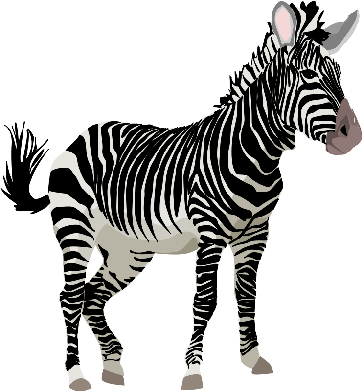 png library stock Zebra clipart. Zoo safari jungle rainforest.