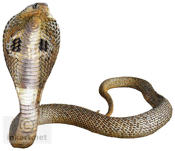 vector black and white download Cobra clipart transparent background. Snake png mart