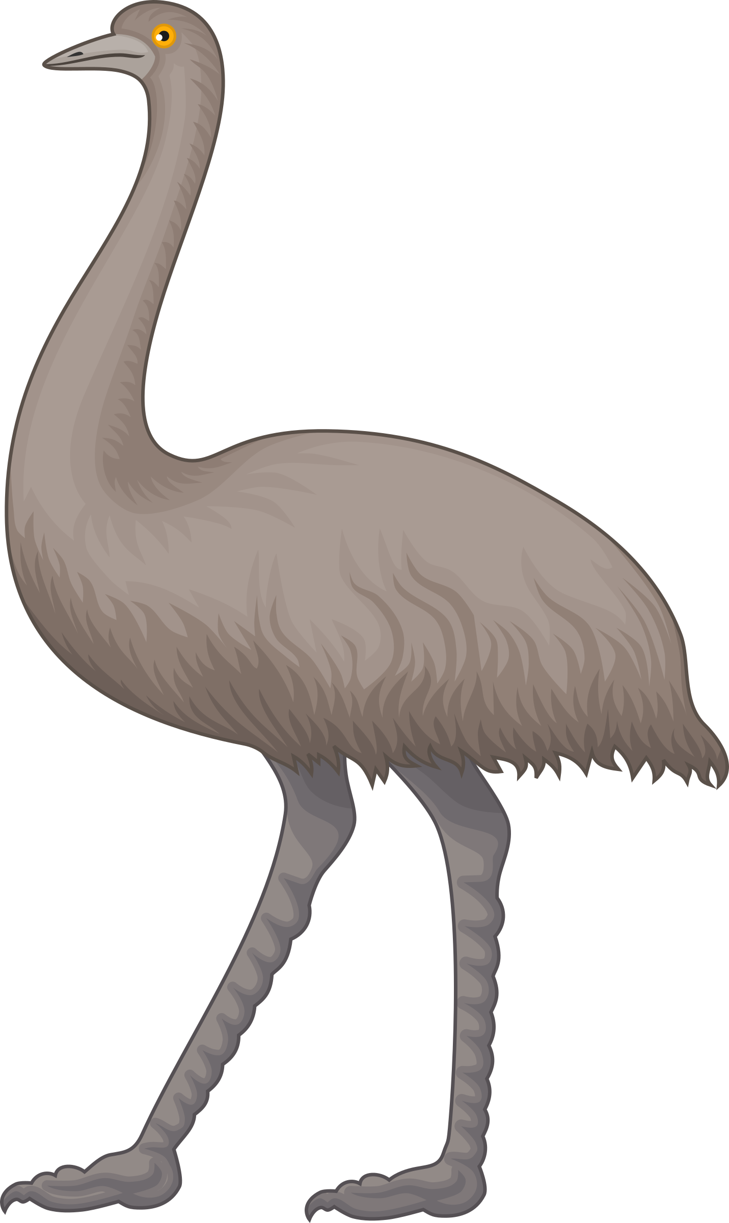 jpg library library Collection of free Emew clipart animal australia