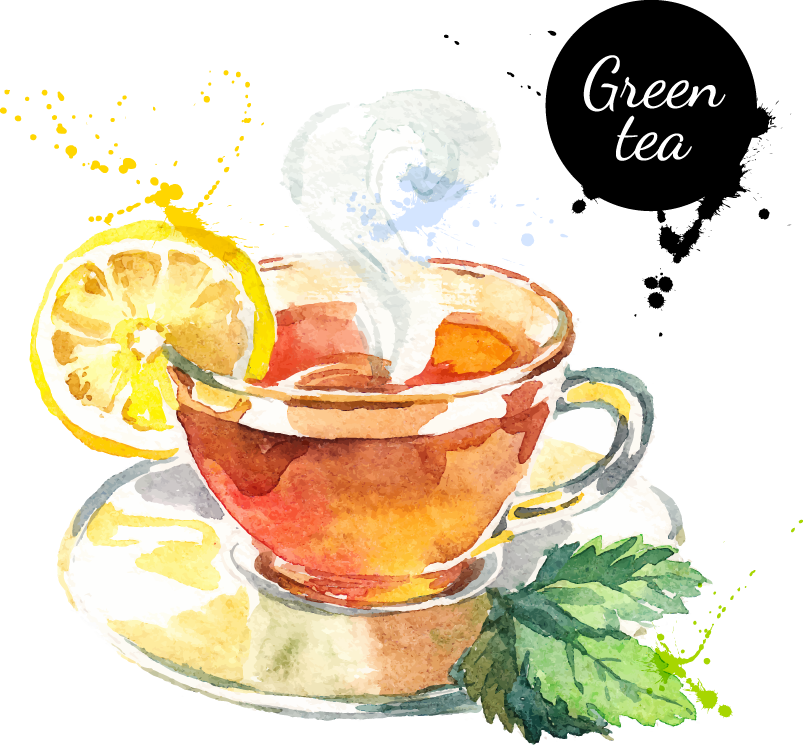 graphic transparent Green tea Darjeeling tea Drawing